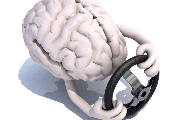 دانشمندان فرمان مغز را شناسایی کردند