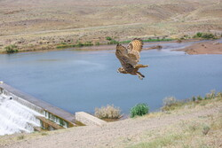 Birds of prey return to nature after getting treatment