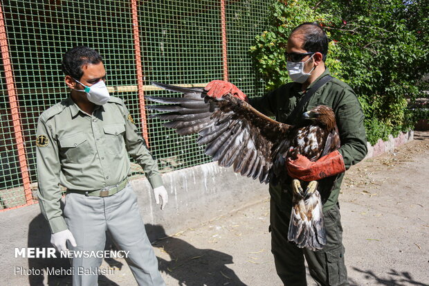 Various birds of prey return to nature after treatment