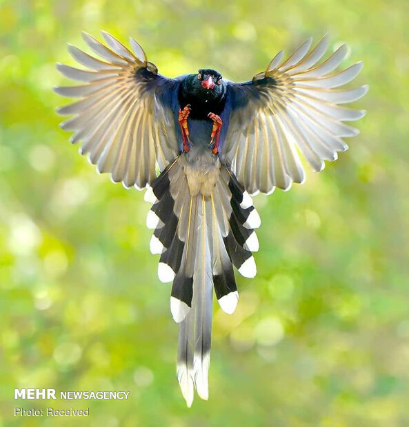 زیباترین پرندگان از گوشه و کنار دنیا