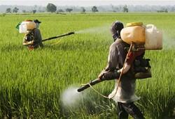 چالش« کاهش آب شویی و هدررفت کود اوره» برگزار می شود