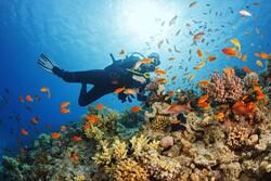 صخرههای شگفت انگیز مرجانی جهان