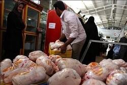 افزایش قیمت مرغ در صورت تداوم کمبود خوراک