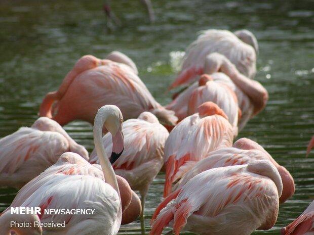 هجوم فلامینگوها به بمبئی نو در دوران قرنطینه