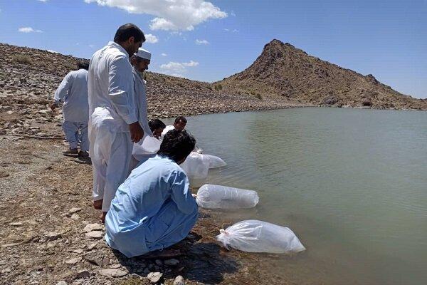 رها سازی بیش از 3 میلیون لارو ماهی گرم آبی در منابع آبی زاهدان