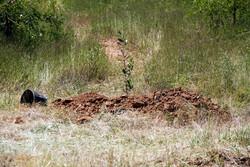 ۱۰ هزار اصله درخت در جوار بقاع متبرکه گلستان غرس می شود