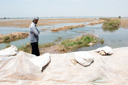 دارایی کشاورزان را آب برد و مسئولان را خواب/ پاسکاری خسارات بین دو وزارتخانه!