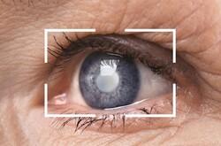 استفاده از یک آنتی اکسیدان طبیعی تاثیر مثبتی در شبکیه چشم دارد