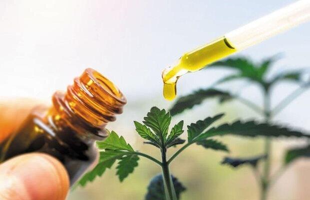 ۲ داروی گیاهی برای تسکین بیماران سرپایی کرونا مجوز گرفتند