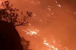 جنگلهای منطقه دمچنار شهرستان بویراحمد دچار آتش سوزی شد