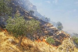 Armed forces dispatch helicopters to extinguish wildfire in SW Iran