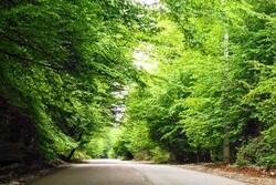 نوجوان گمشده در پارک جنگلی کردکوی پیدا شد