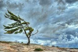 وزش باد بسیار شدید همراه با گردوخاک خراسان شمالی را در برمیگیرد