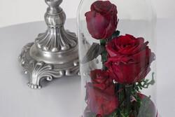 رنگهای متفاوت گل رز چه مفهومی را تداعی میکنند