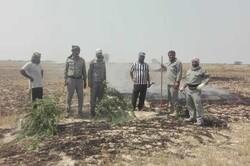 آتشسوزی در منطقه حفاظتشده «مند» بوشهر مهار شد