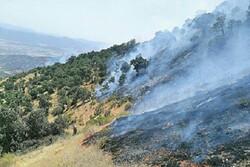 آتش وحشی در دل جنگل های زاگرس