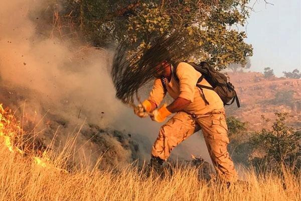 افزایش تاب آوری جنگل با سند جامع حفاظت و مدیریت پایدار زاگرس