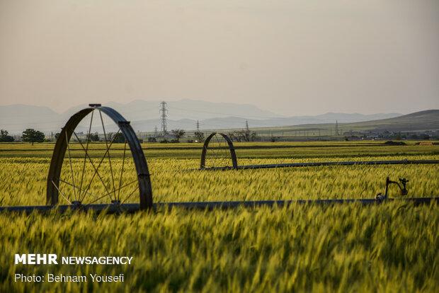 Grain fields in Markazi Province