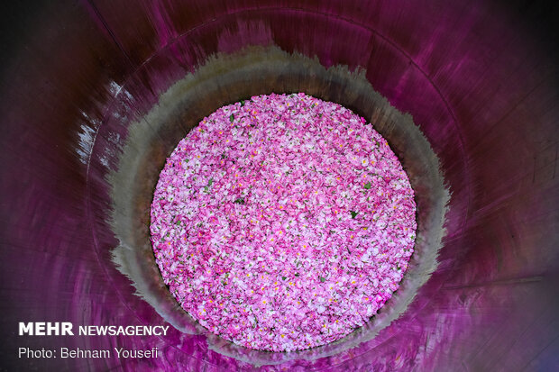 إنتاج ماء الورد