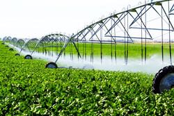 صرفه جویی ۶۲۵ میلیون مترمکعبی آب در بخش کشاورزی آذربایجان غربی