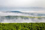 ۲۰۰۰ هکتار از اراضی ملی استان کردستان جنگل کاری میشود