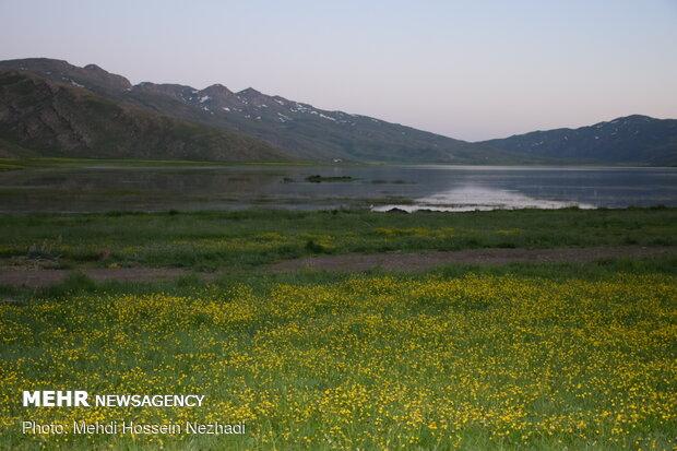 بار آلودگی دریاچه نئور کاهش مییابد
