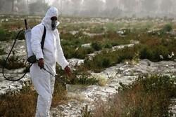 مبارزه با ملخ صحرایی درسیستان وبلوچستان نیازمند امکانات بیشتر است