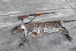 شکارچی پلنگ در شهرستان سیاهکل دستگیر شد