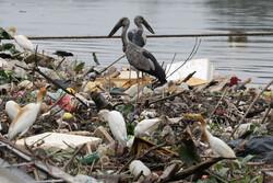 زباله تهدیدی برای بقای زمین