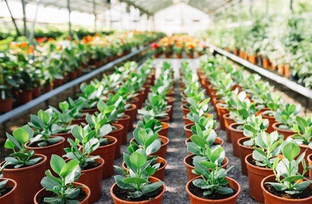 توسعه کشت گلخانهای در اولویت سیاستهای جهاد کشاورزی اصفهان است
