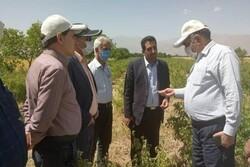 بازدید معاون وزیر جهاد کشاورزی از روند اجرای طرح توسعه باغات لرستان