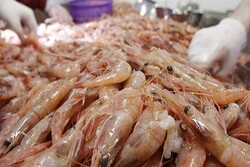 Iran's re-export of fishery products to EU kicks off despite US sanctions