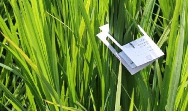 کنترل بیولوژیک آفات و گسترش مبارزه تلفیقی در اراضی کشاورزی