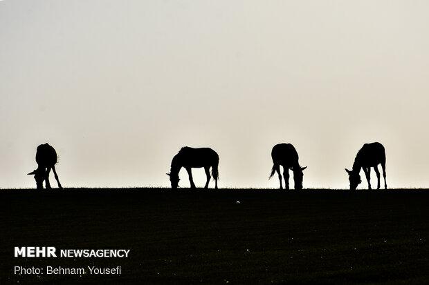 الطبيعة الساحرة لمدينة اردبيل شمال غرب ايران