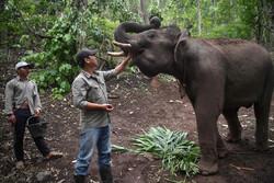 روزهای بدون گردشگر فیلهای تایلندی