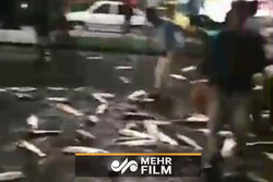 VIDEO: Truck carrying fish topples in Babol, Mazandaran
