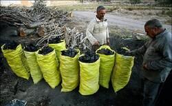 اعلام جرم علیه واحدهای تولید زغال در ملارد