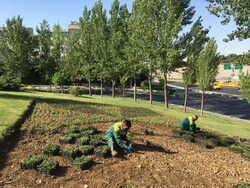کاشت بیش از ۸ هزار متر مربع نشای گلهای فصلی در منطقه ۱۳