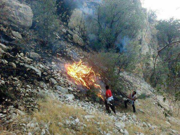 آتش سوزی در مراتع ساردوئیه در جنوب کرمان