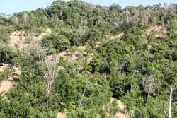 ۳۵۰ هکتار به وسعت جنگلهای همدان اضافه شد
