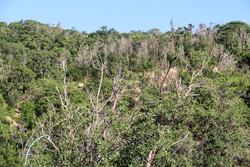حال بد درختان پارک جنگلی میانه