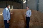 پرداخت ۲۳۳ میلیارد مطالبه خرید تضمینی گندم به کشاورزان لرستانی