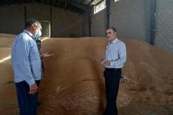 مشکلی در تامین آرد نداریم/ذخیره ۲۳۷هزارتنی گندم در آذربایجان غربی