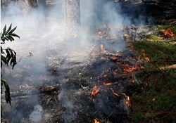 آتش سوزی میانکاله مهار شد