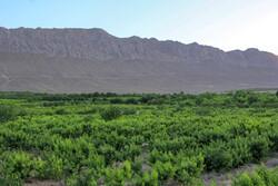 احداث ۵ هزار هکتار باغ در اراضی شیبدار لرستان طی امسال