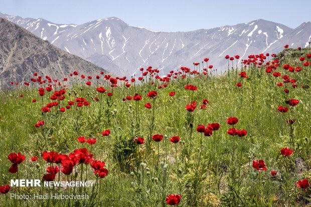 """سهول """"لار"""" الواسعة في شمال ايران"""