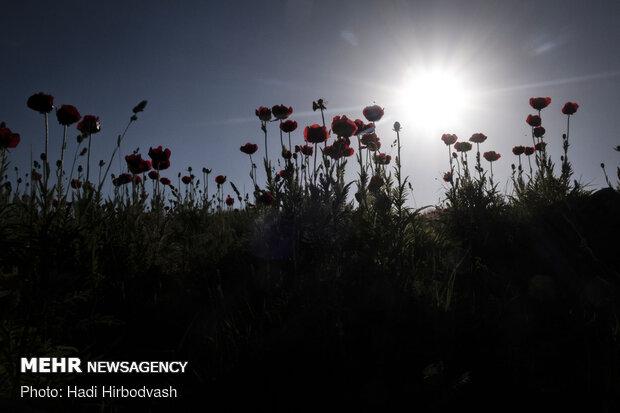 Eye-catching beauty of Lar National Park