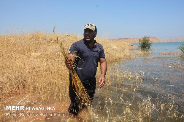 زمینهای کشاورزی روستاهای اطراف سد گتوند همچنان زیر آب 2
