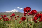 همه چیز درباره سرنوشت مرتفعترین قله ایران+ سند