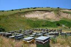 ۱۸۵۷ تن عسل طی سال گذشته در کردستان تولید شد